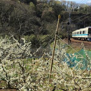 隠れ里の春(小田急電鉄)
