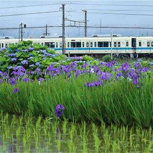 季節の箱庭、咲きました(小田急電鉄)