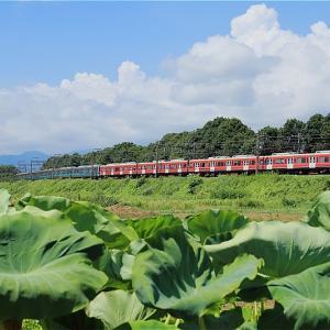 ささやかな夏の祭り(小田急電鉄)