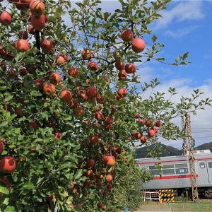 りんごの丘を行く(長野電鉄)