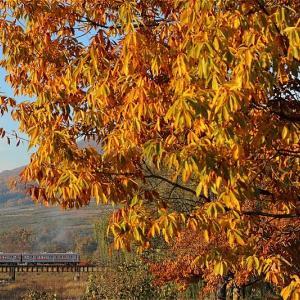 秋の陽の下で(長野電鉄)