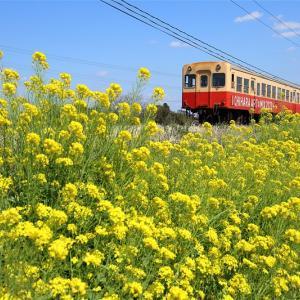 快走、春のお立ち台(小湊鐵道)