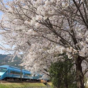 プチ・桜巡り(小田急電鉄)