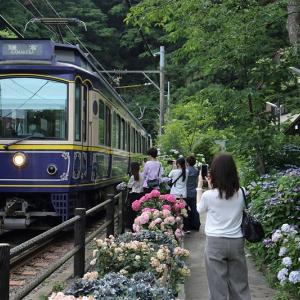 ファーストショット、紫陽花(江ノ島電鉄)