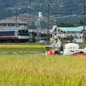 稲の香り(小田急電鉄)