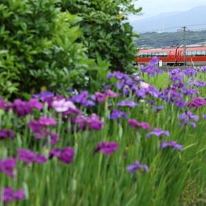 涼色の箱庭(小田急電鉄)