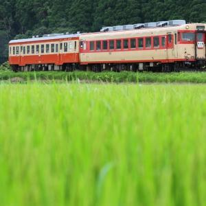 しみ入る緑とツートンカラー(いすみ鉄道)