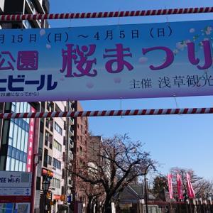桜満開(2)?