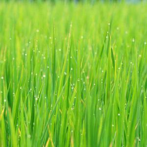 夏のフツーの草花
