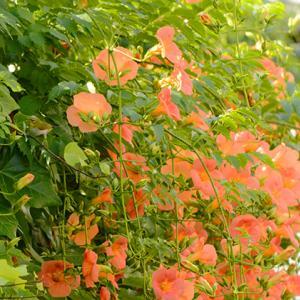 極小の花と、鳥のいる風景