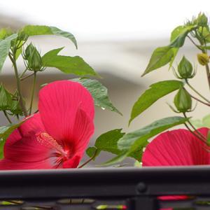 梅雨の庭と、お豆腐スイーツ