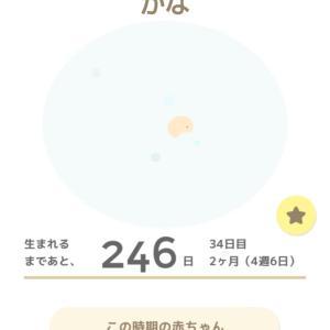 D35 (4w6d)トツキトウカ