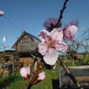 春爛漫のろん農園。