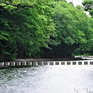 雨中散歩 矢久橋‐飯能河原 2021-06-04
