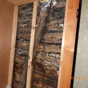 雨漏れによるシロアリ被害