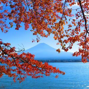 紅葉の富士と河口湖