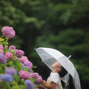 紫陽花フォト