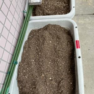 ジャガイモ植えました!