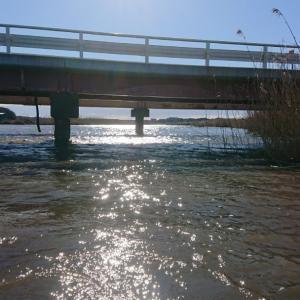 2021年始動  3/14(日)印旛沼水系釣行