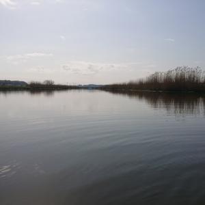 今期初50UP…      4/3(土)印旛沼水系釣行