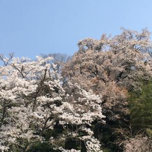 日本は今週緊急事態宣言