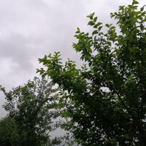 今日も自然は格別に美しい、この中に居ると病気って何が原因だろうと思う