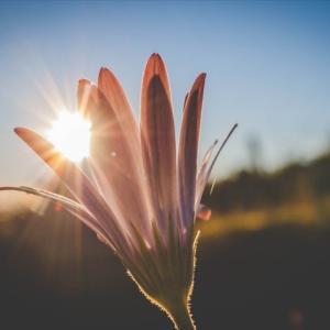 食事を意識するのと同じくらい日光を浴びるのも大切!