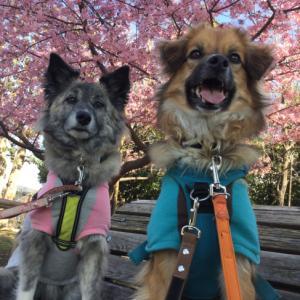 青空と桜とわんこと
