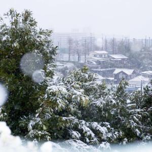 2020/03/29 桜の季節、雪になりました!