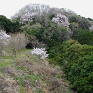 桜の花びらでハートを!