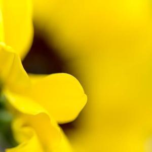 お家Photo📸 小さな向日葵