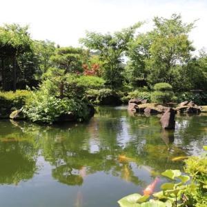 高尾駒木野庭園 ハスの花(1)
