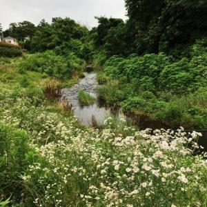 湯殿川をのんびり散策&ランチ