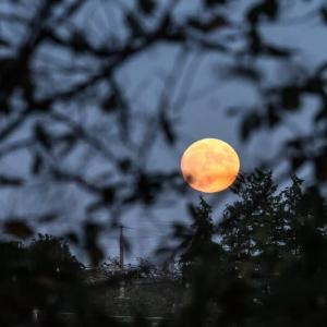 2021/09/20 小望月&湯殿川で見かけたワレモコウ