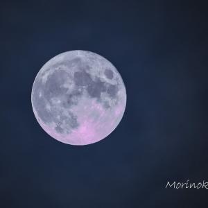 中秋の名月8年ぶりに満月となりました!