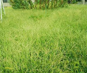 雑草の草原
