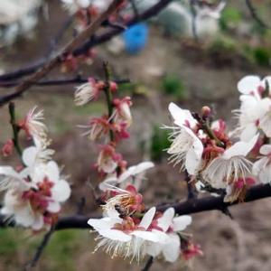 3連休の海況&梅の花