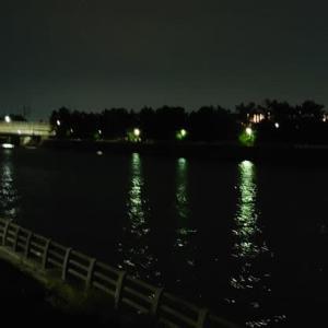 深夜にこっそり河口調査
