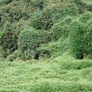 マルハクの森