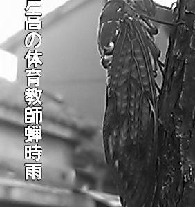 20-7/30『俳句ポスト……蝉』