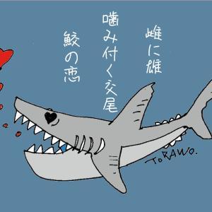 20-12/17『俳句ポスト…鮫』