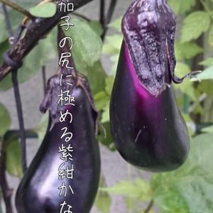 20-12/25『俳句界1月号』
