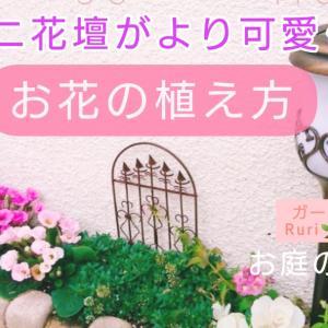 ミニ花壇の模様替え❤(ӦvӦ。)