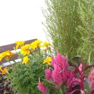 秋仕様になったDIYミニミニ花壇