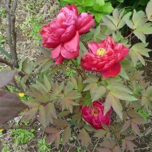 4月21日 やっぱり花はいいね