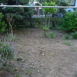 5月2日 庭の草取り