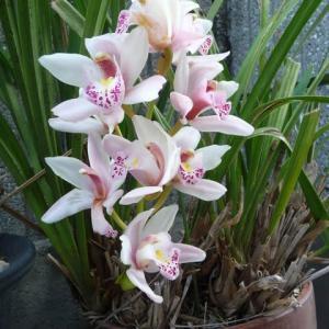 5月1日 我が家の5月の花