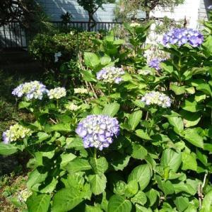 5月30日 我が家の庭の花