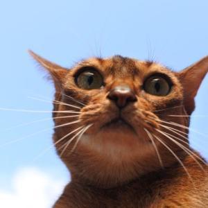 暑いトタン屋根の猫