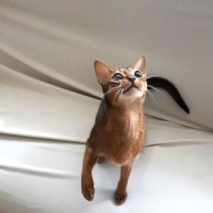 かわうそ猫